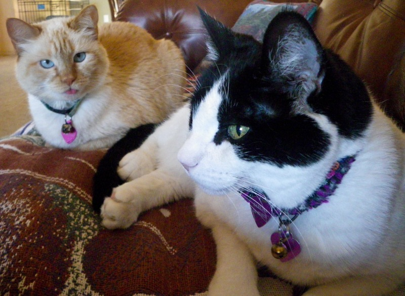 Tajah and Sabrina