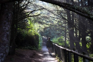 Oregon Coast family weekend in Rockaway Beach - Mike wandering the misty trails near Cape Meares Lighthouse